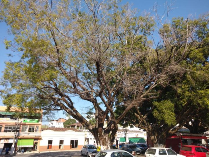 Comunicado Oficial referente a supressão da àrvore Praça Guarurama